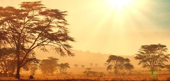 african-savannah-at-sunrise.jpg