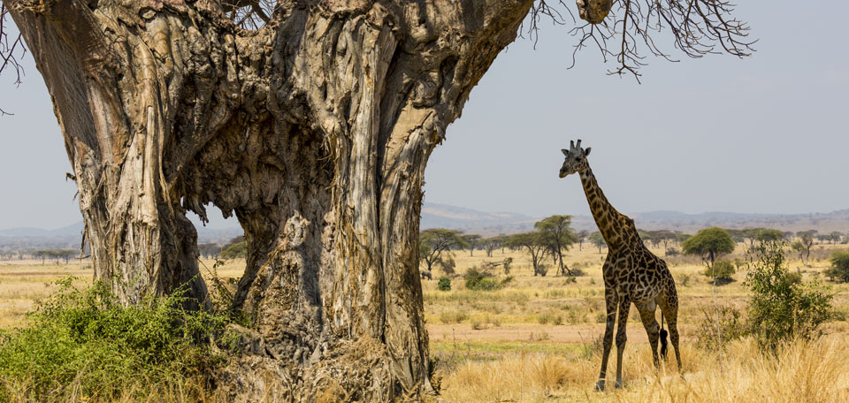 Ruaha safari holidays img