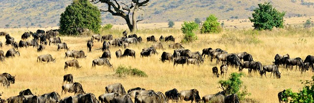 Africa's Great Wildlife Migration Explained
