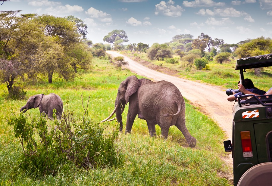 Holiday Inspiration - Family Safari