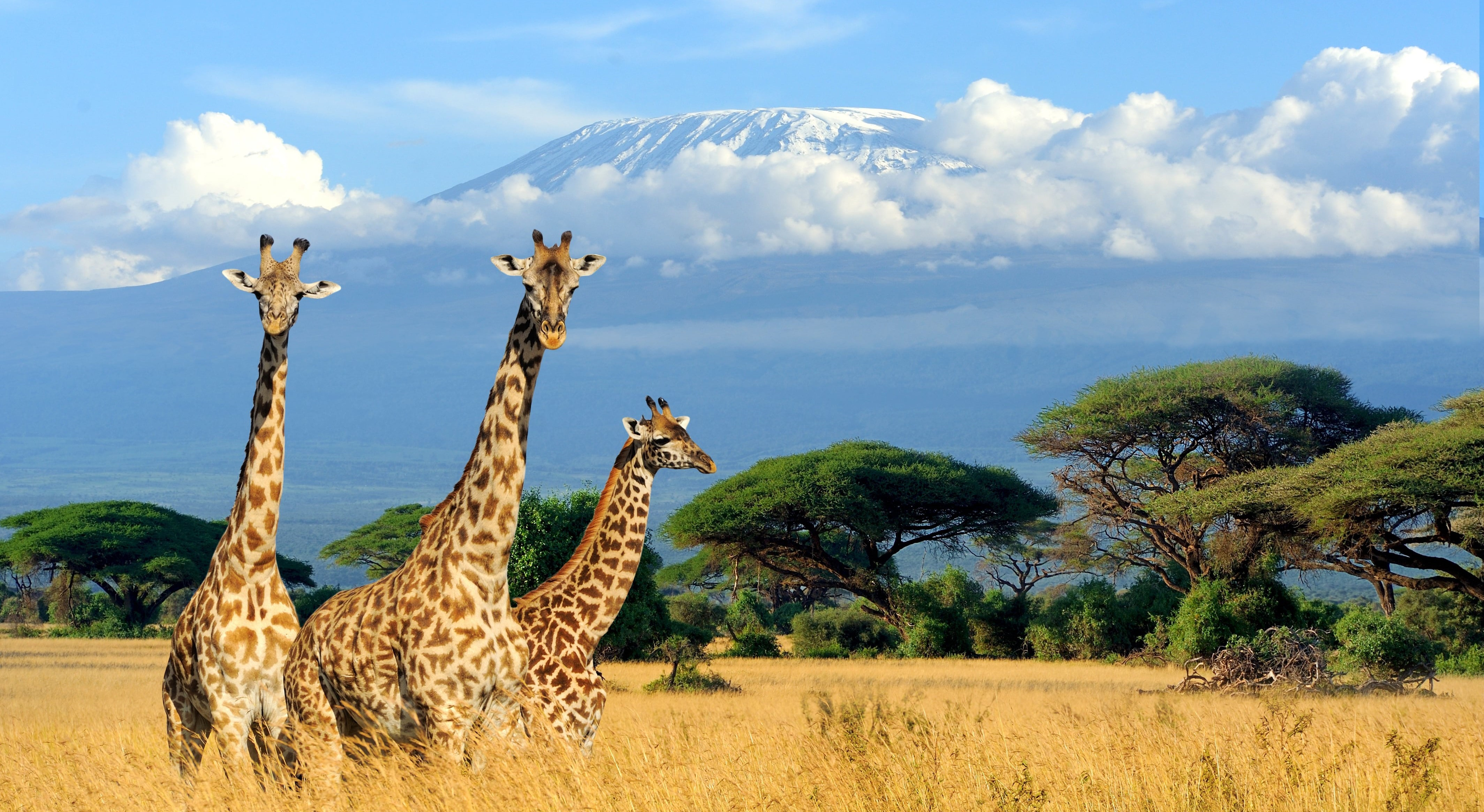 luxury kenya safari 2020